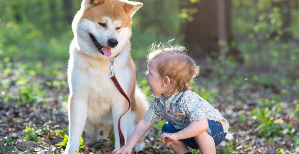akita with children