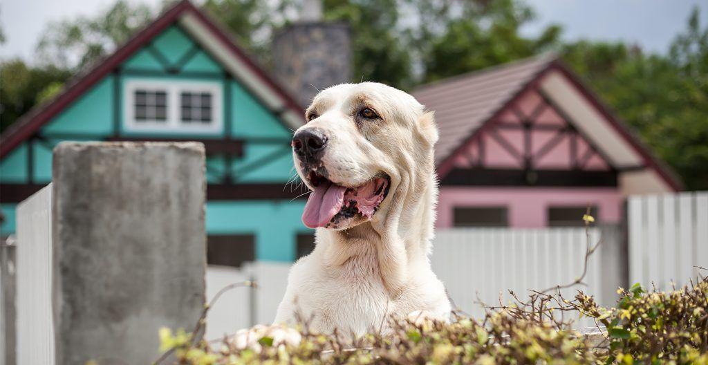 dog-protecting-house