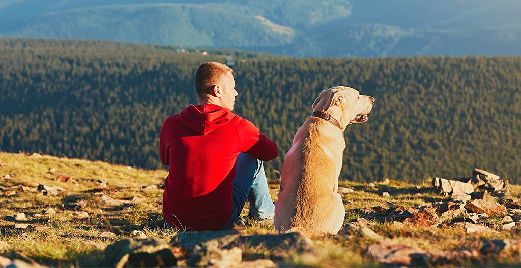 dogs-are-loyal-and-always-there