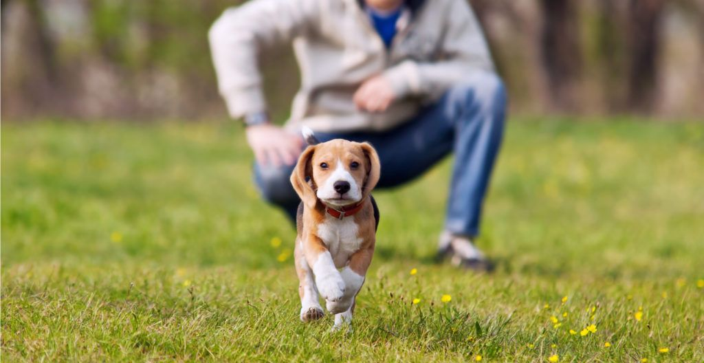 6-months-puppy-training