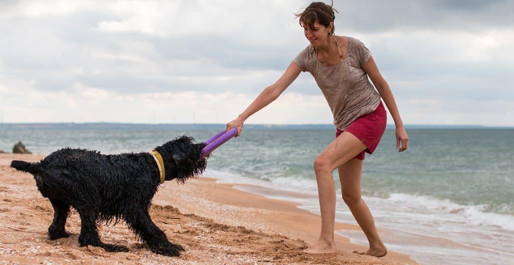Black-russian-terriers-training