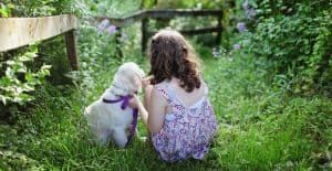 Golden-retriever-with-owner