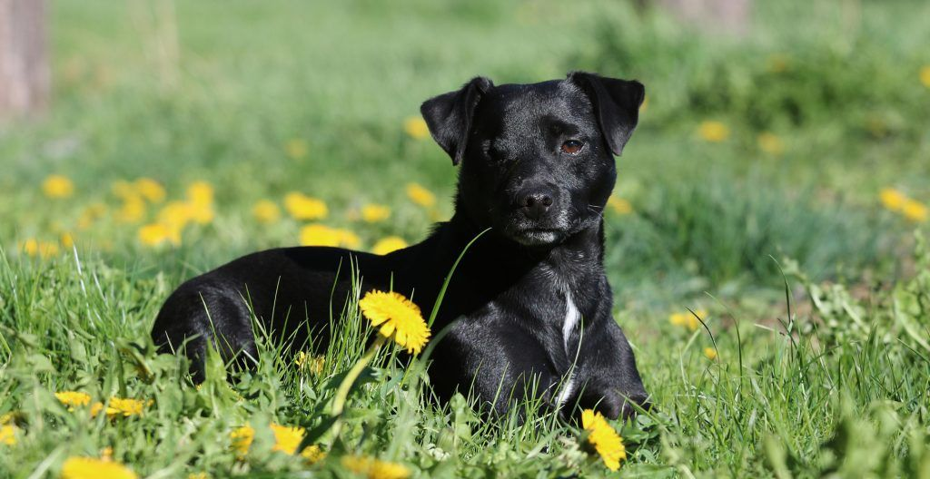 Patterdale-Terrier-summer
