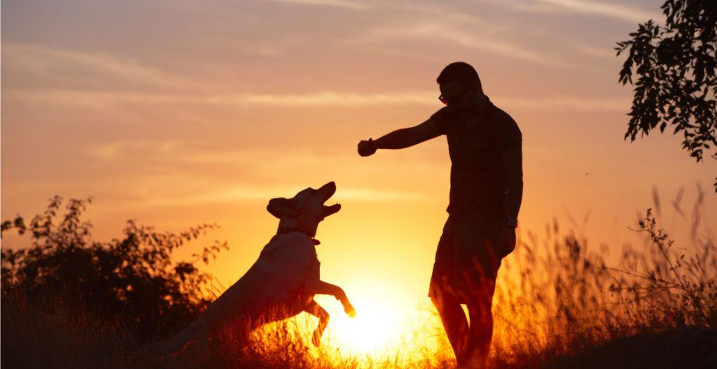 basic-commands-for-dog