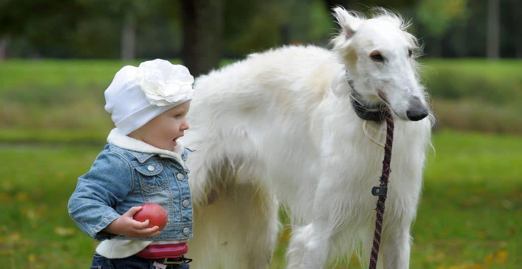 borzoi-with-a-kid