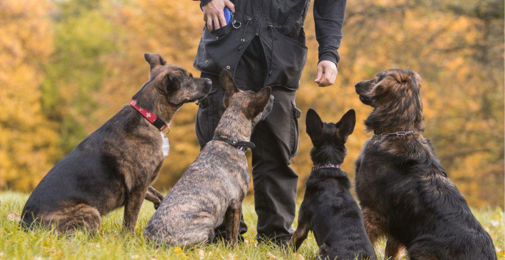 consistent-dog-training