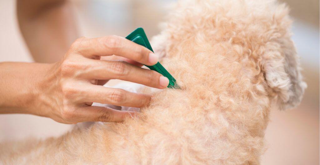 dog-flea-tick-prevention