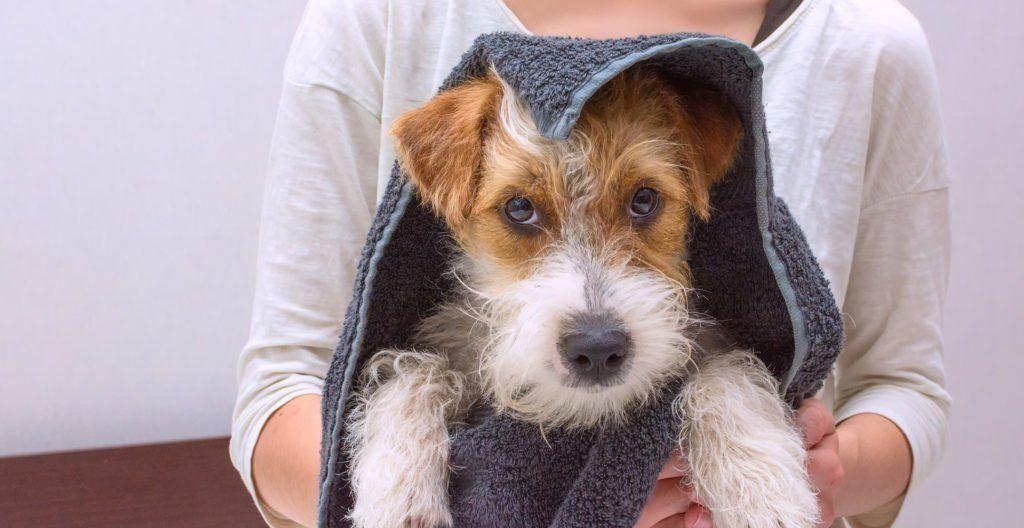 dog-grooming