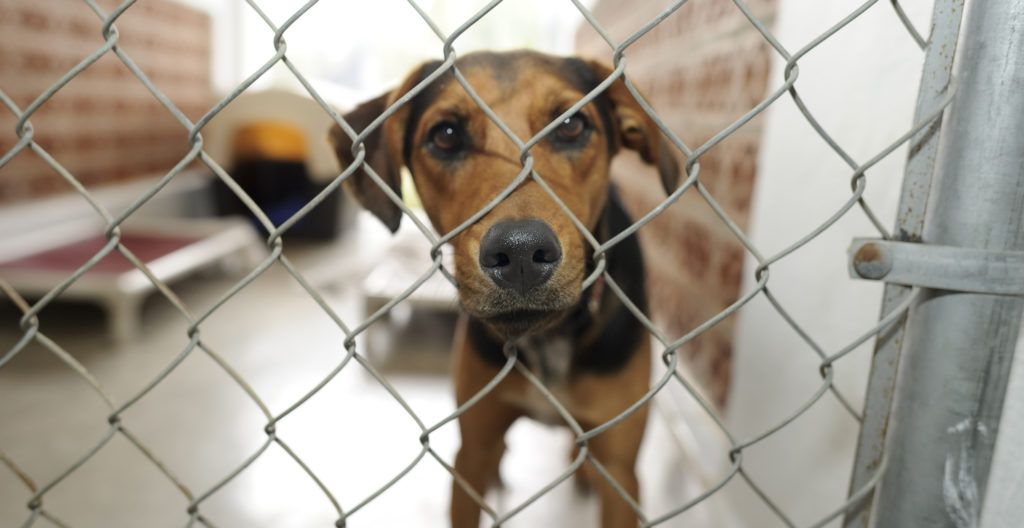 dog-in-a-shelter