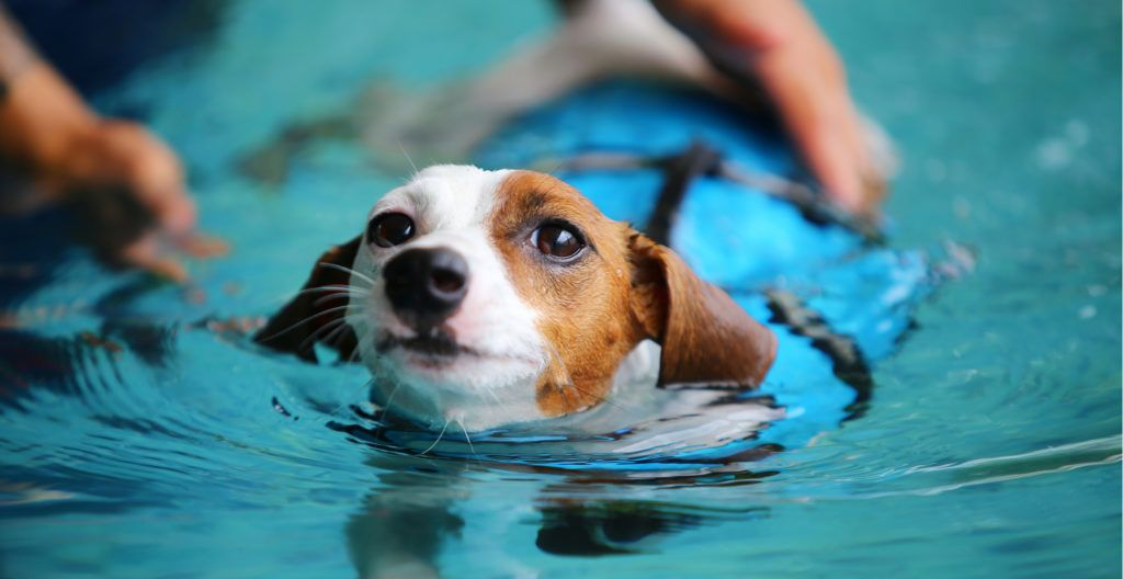 loing-training-for-dog
