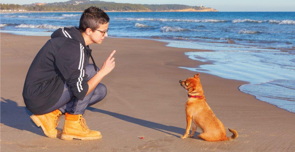 short-dog-training-session