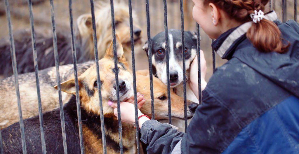 volunteering-in-a-dog-shelter