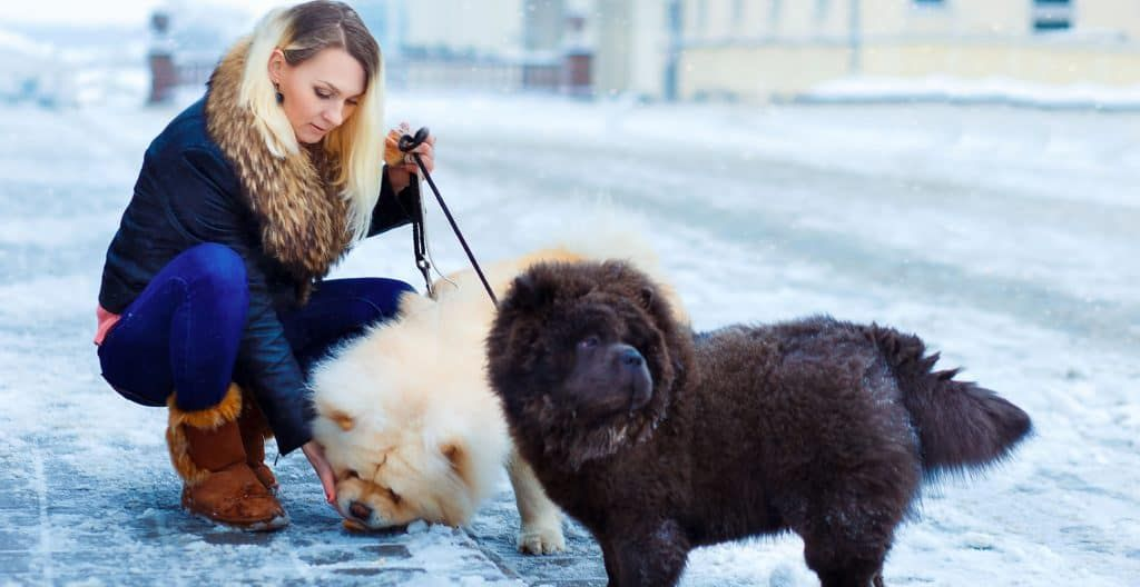 CHOWCHOW-EXERCISE