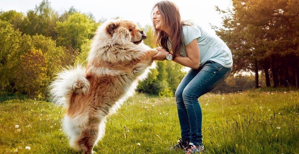 CHOWCHOW-PLAYING-WITH-BREEDER