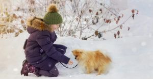 pomeranina--in-the-snow
