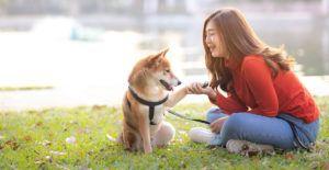 shiba-inu-with-person