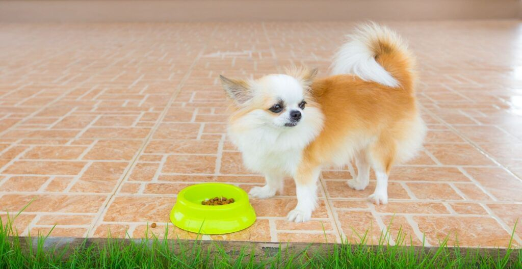 best-dog-food-for-small-dogs