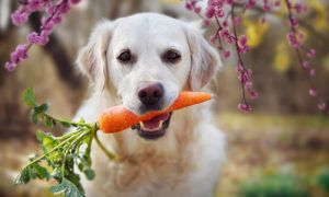 can-dogs-eat-carrots