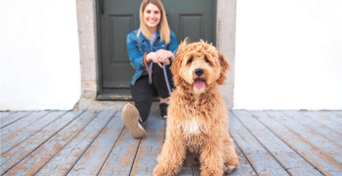 labradoodle-personality