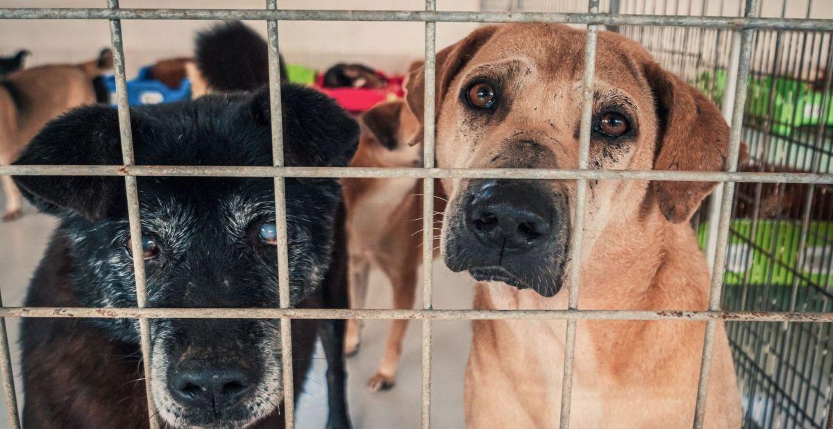 how-to-prevent-animal-cruelty