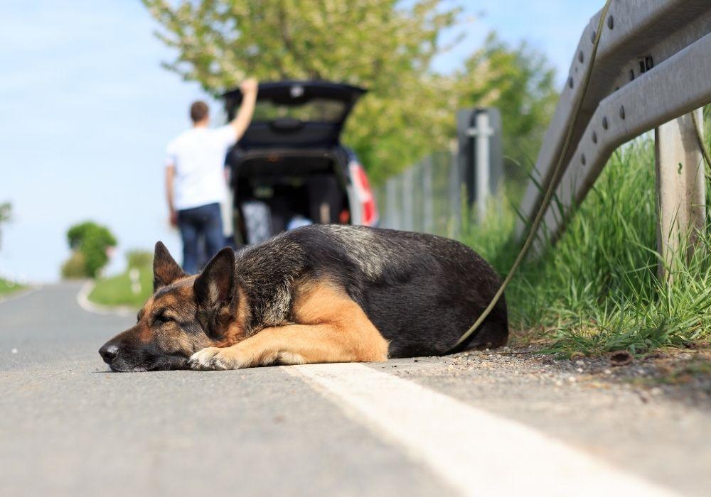 report-animal-cruelty