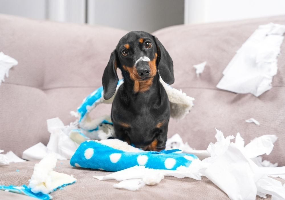 discipline-puppy-bad-behavior