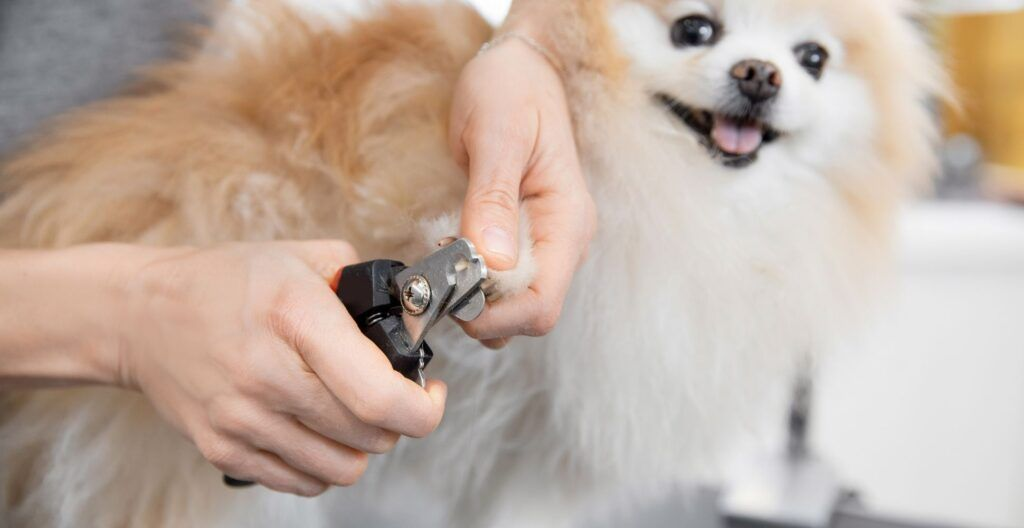 how-to-trim-puppy-nails