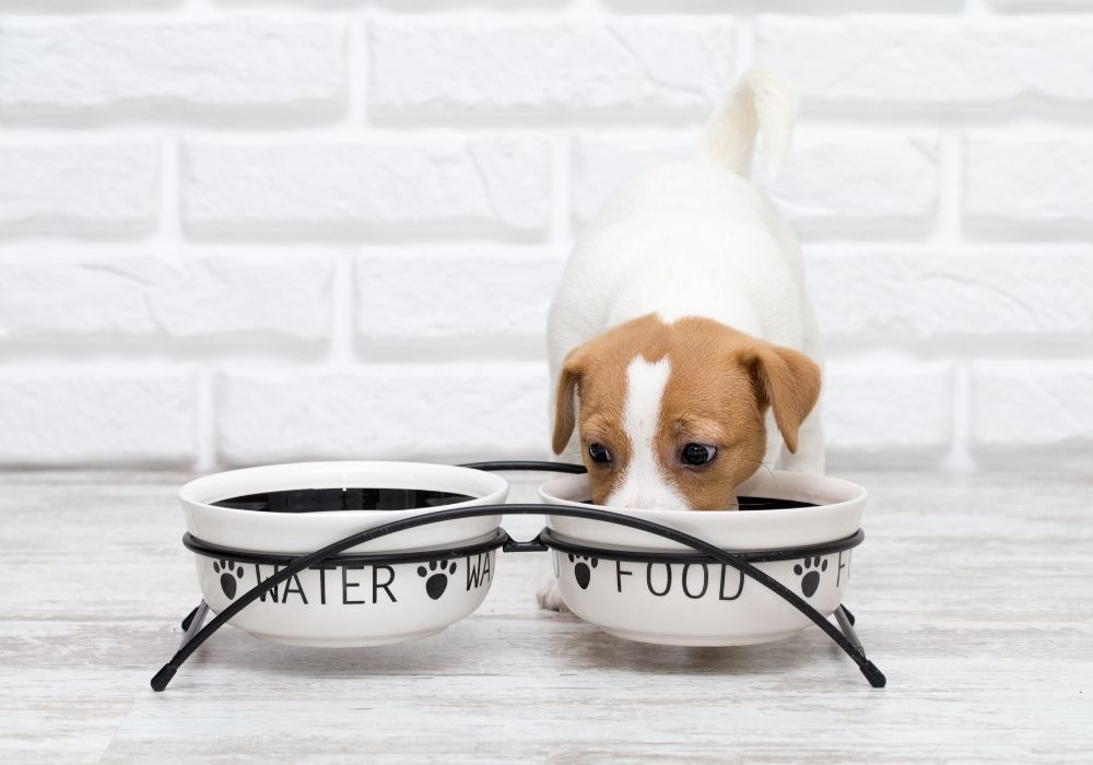 puppy-eats-food-from-bowl