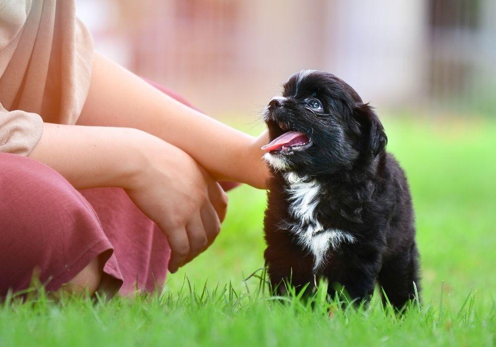 puppy-in-garden