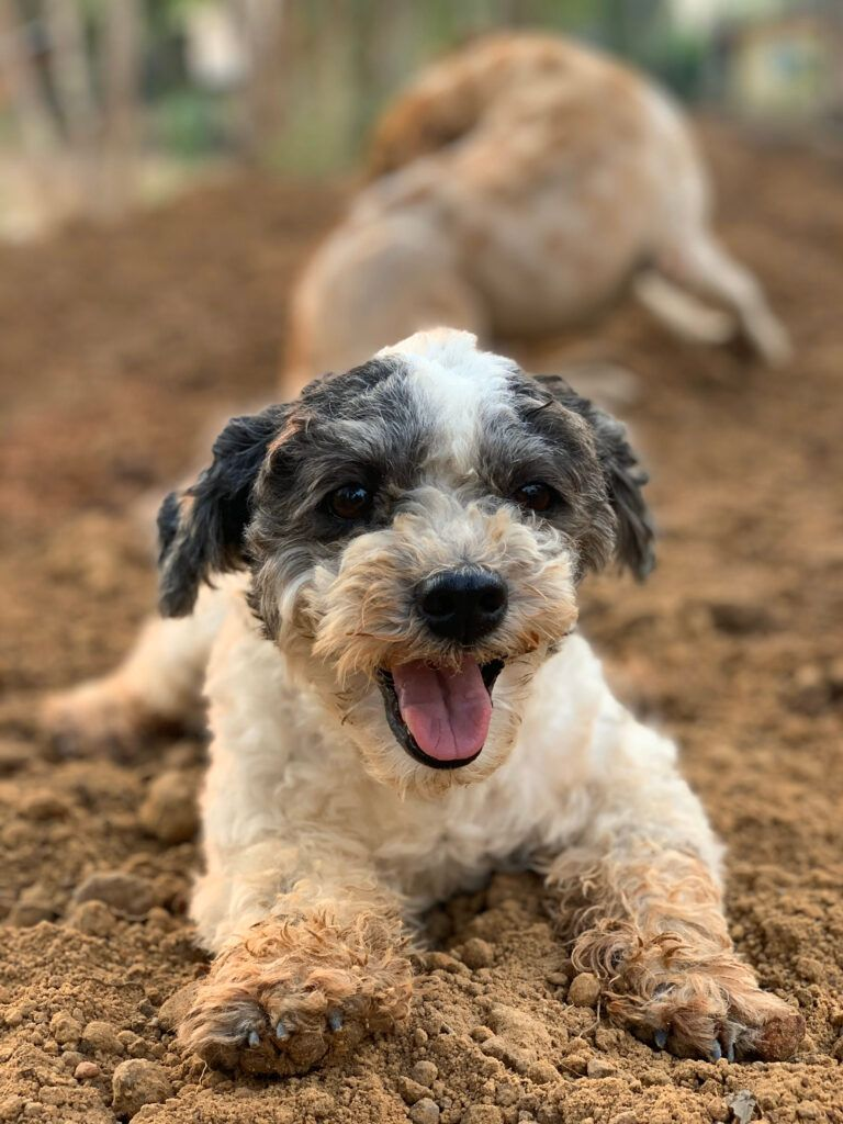 puppy-playing-on-the-pile-of-soil