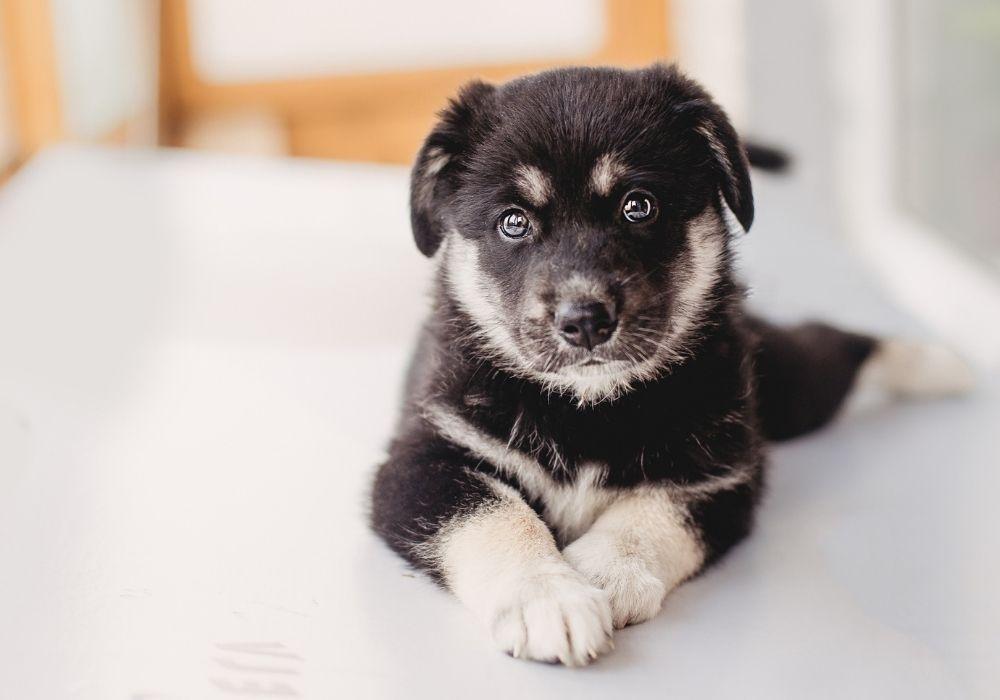 puppy-worming-schedule