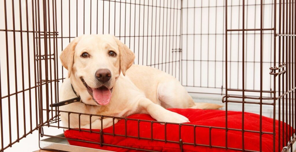 best-collapsible-dog-crate