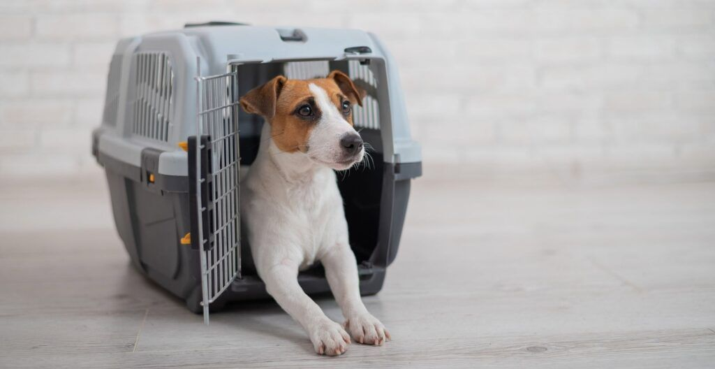 best-dog-crate-for-separation-anxiety
