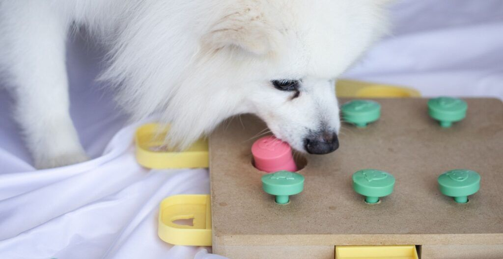 best-dog-toy-for-a-bored-dog