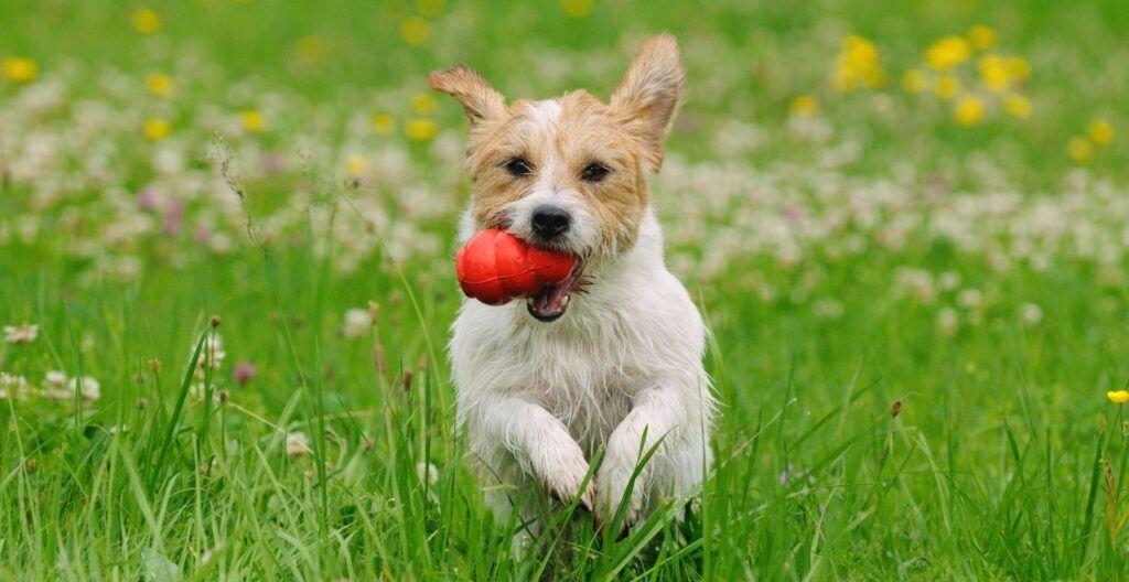 best-dog-toy-that-dont-squeak