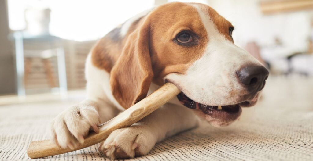 best-dog-treats-for-aggressive-chewer