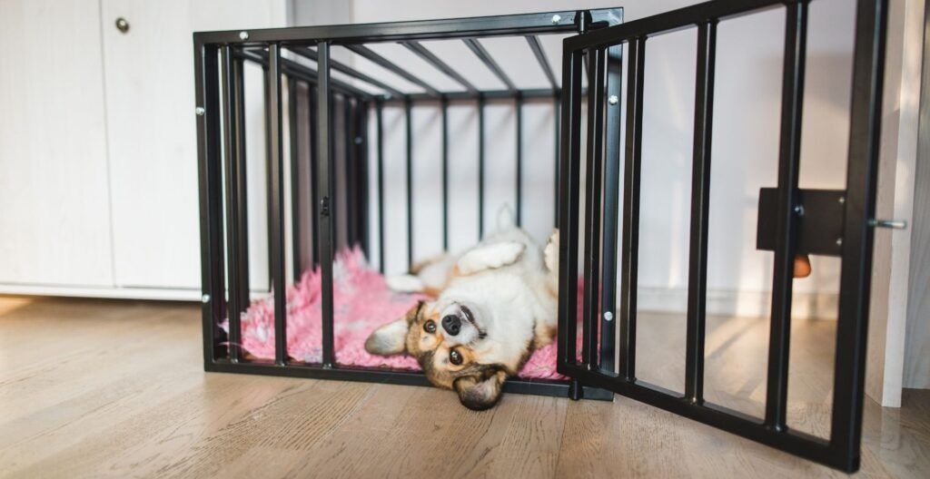 best-heavy-duty-dog-crate