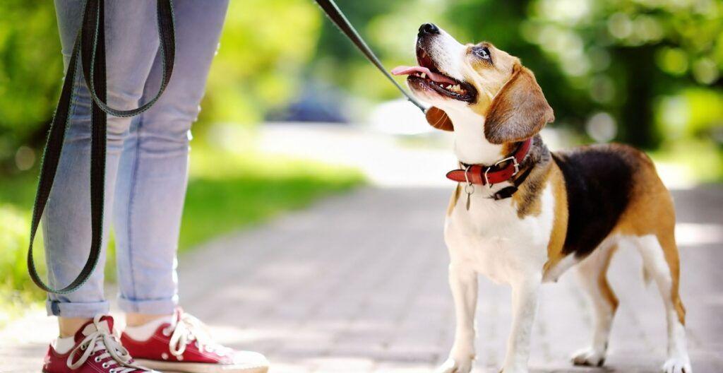 best-leather-dog-collar