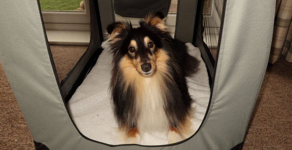 best-soft-dog-crate