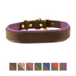 perris-havana-padded-leather-dog-collar