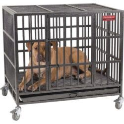 proselect-empire-single-door-steel-dog-crate