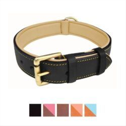 soft-touch-collars-leather-two-tone-padded-dog-collar