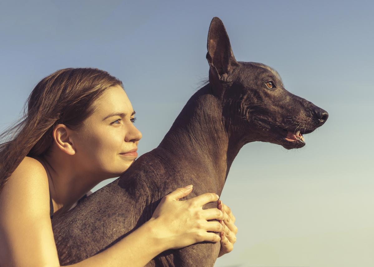 xoloitzcuintli-dog-breed-personality