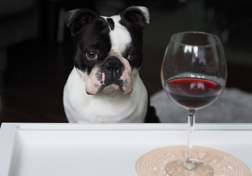alcohol-toxic-to-dogs