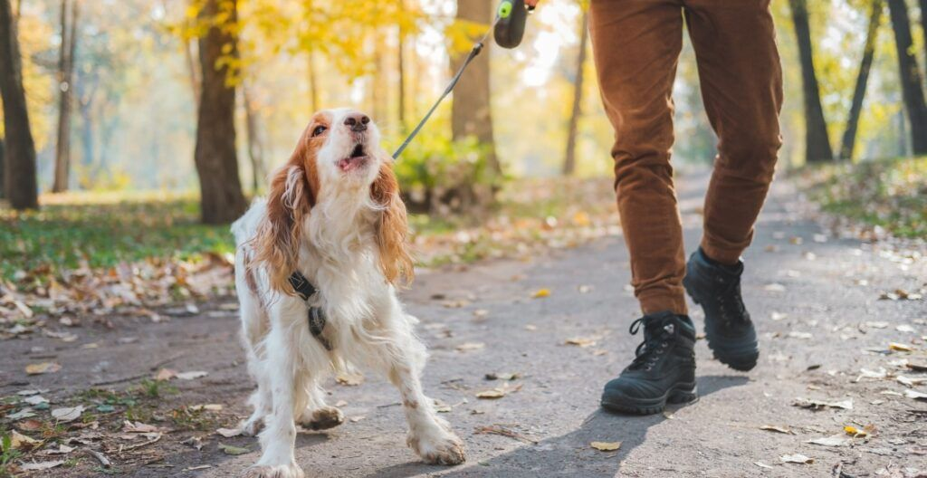 best-dog-leash-for-pullers