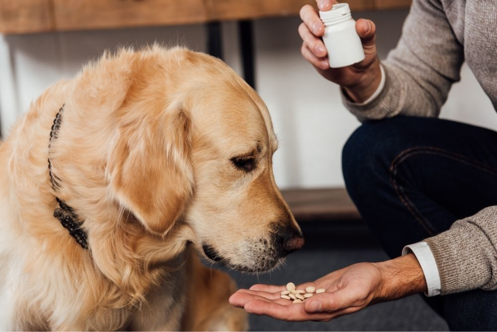 does-your-dog-need-vitamin-supplements