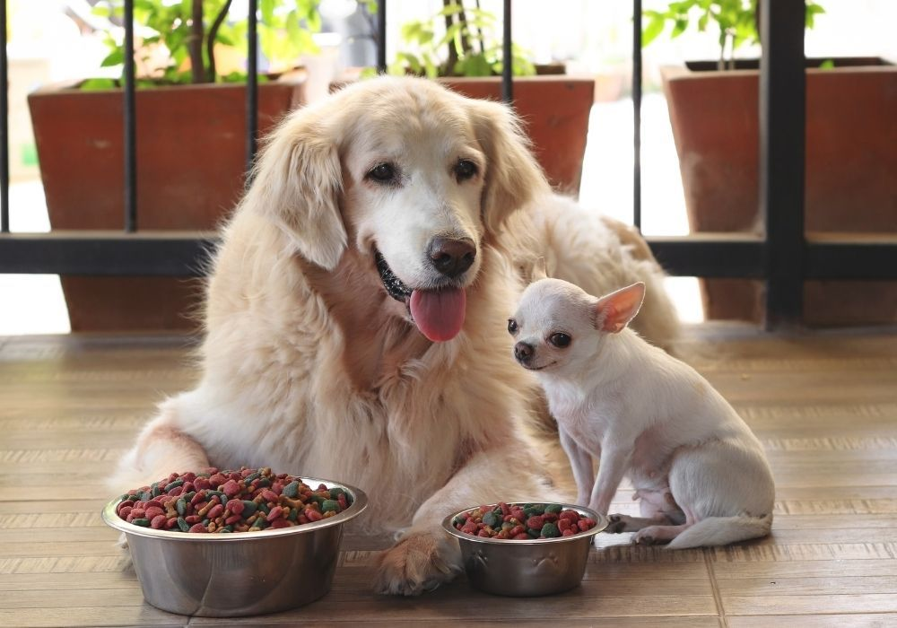 dog-food-ingredients-to-avoid