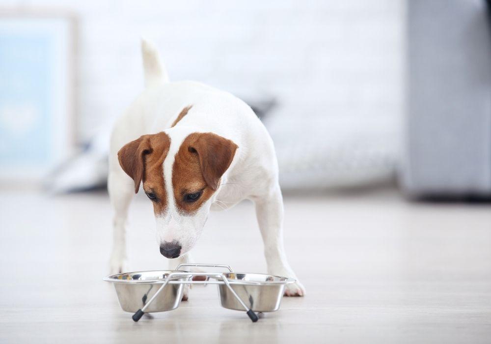 dog-food-routine