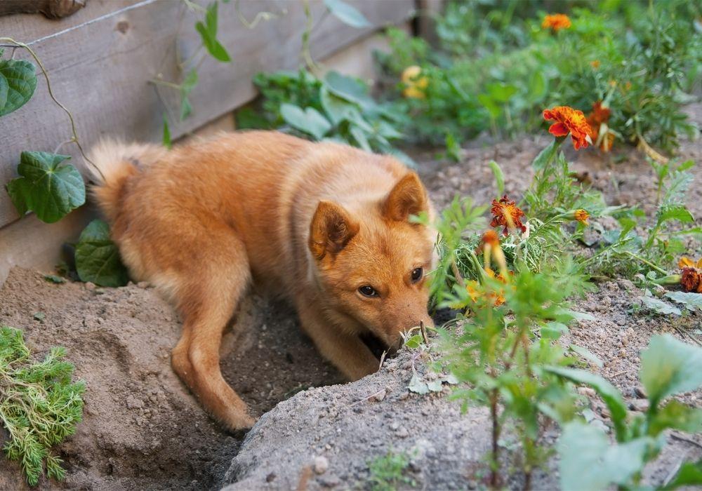 dog-hiding-treats