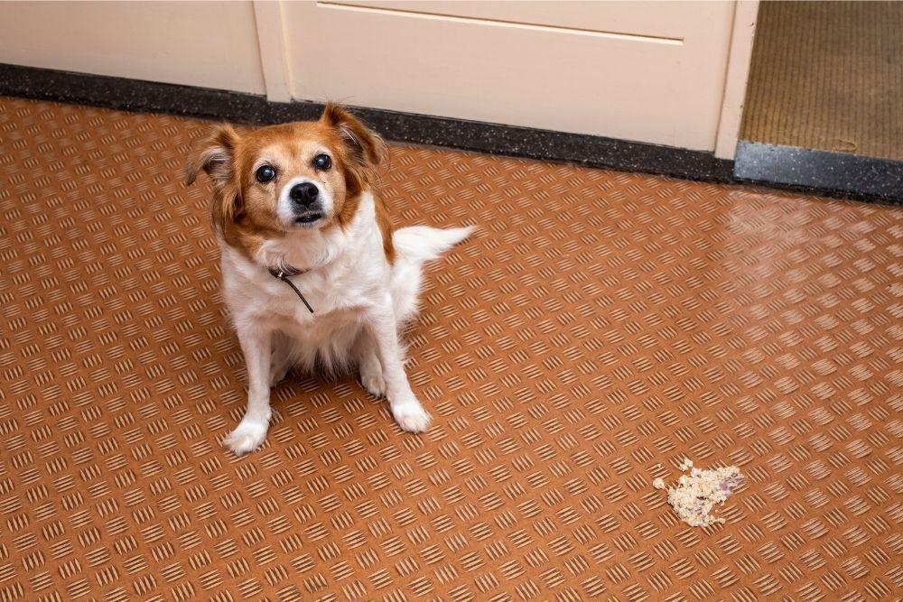 dog-vomit-in-living-room